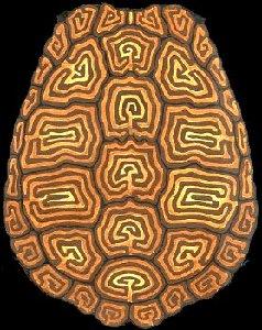 Turtle Shell Pattern | www.pixshark.com - Images Galleries ...